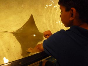 New England Aquarium Rays