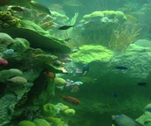 New England Aquarium Reef