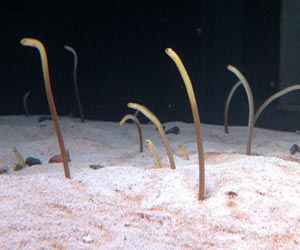 New England Aquarium Worms