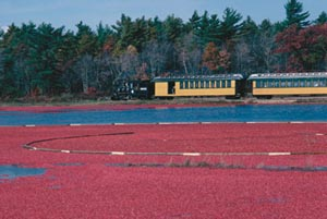 National Cranberry Festival at Edaville USA
