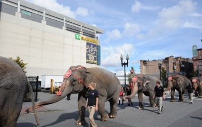 Elephant Parade to TD Garden Circus is in Town Boston Central
