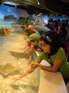 Shark & Ray Touch Tank at New England Aquarium