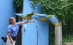Masters of Flight: Birds of Prey at Stone Zoo