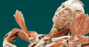 Body Worlds Vital at Faneuil Hall
