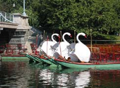 Swan Boat Rides