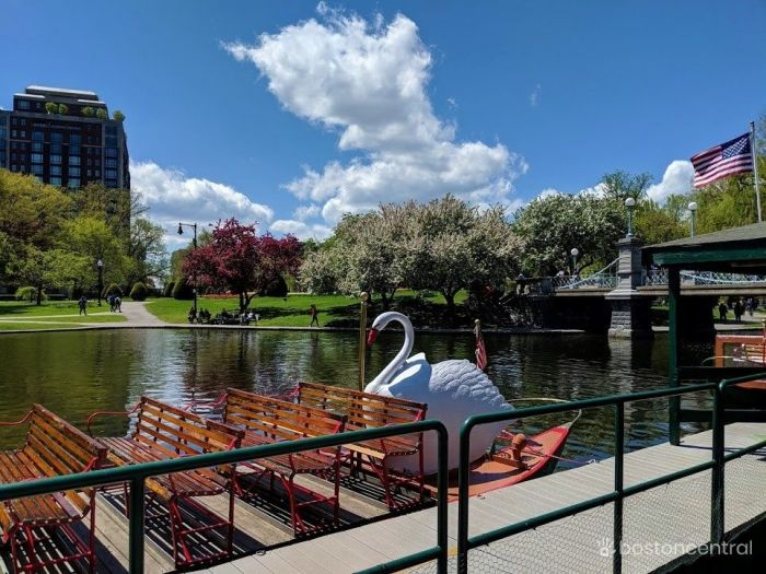 Boston Outdoors Swan Boats at the Public Garden