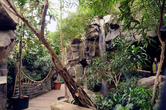 franklin-park-zoo-tropical-winter