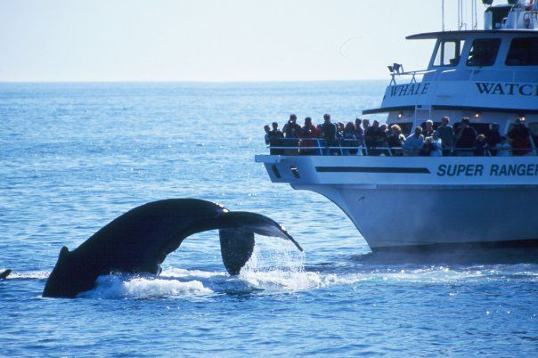 boston-whale-watching-august-tours