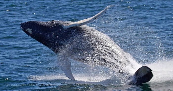 boston-whale-watching-tours