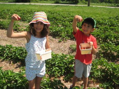 Places to Pick your Own Strawberries Near Boston