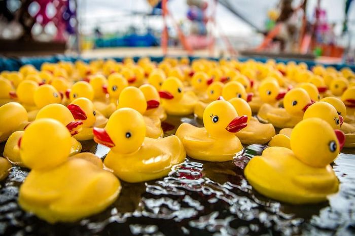 Mildam Rubber Ducky Fair