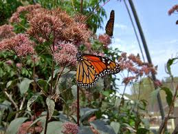 butterfly garden at museum of science photo