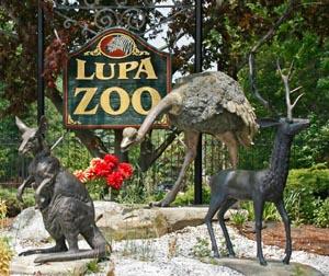 lupa zoo photo