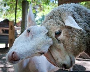 winslow farm animal sanctuary photo