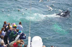boston harbor whale watching photo