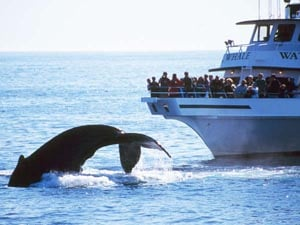 seven seas whale watching photo