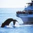 seven seas whale watching small photo