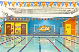 goldfish swim school photo
