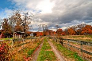 codman community farm photo