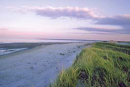 Crane Beach Reviews Local Guide