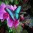 magic wings butterfly conservatory small photo