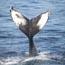 cape ann whale watch small photo