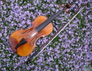 brookline violin lessons photo
