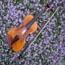 brookline violin lessons small photo