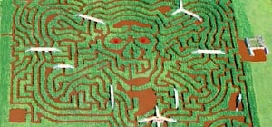 davis farmland's corn mega maze 2021 photo