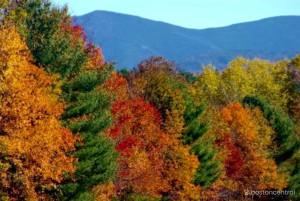 new england fall foliage hotlines  websites photo