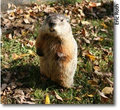 groundhog day  climate action day drumlin farm photo