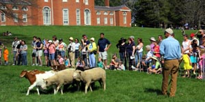 gore place sheepshearing festival 2019 photo