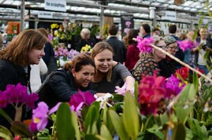 world of orchids show by the massachusetts orchid society photo