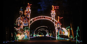 bright nights at forest park holiday lights photo