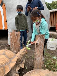 tortoise encounter  feeding at stone zoo photo