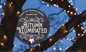 autumn illuminated at tower hill botanic garden photo