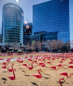 flock of flamingos photo