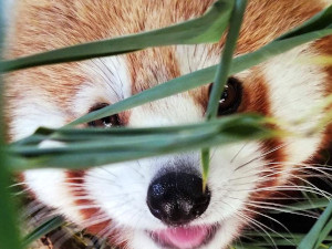 deja zoo escape adventure after hours programs at buttonwood photo