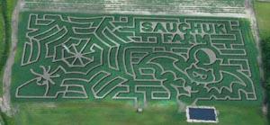 corn maze at sauchuk farm photo